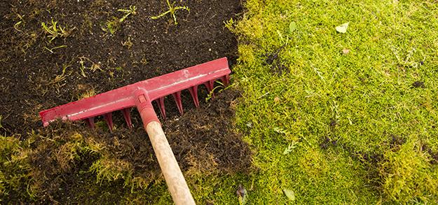 désherbant naturel, lutter contre les mauvaises herbes