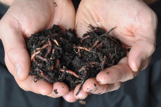 compost, vers de terre