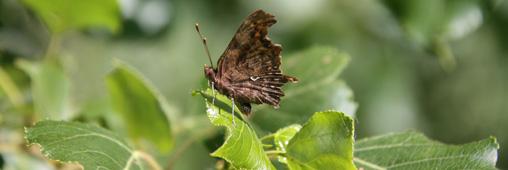 Science participative : observez les petites bêtes reines des forêts !