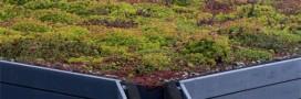 Sopranature: des toits végétaux pour un habitat durable