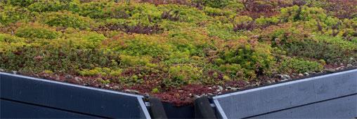 Installer un toit végétalisé