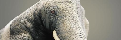 SOS Virunga : le WWF se mobilise pour sauver le plus ancien parc africain