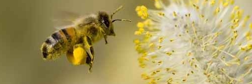 900 000 abeilles pour repeupler les ruches dans les Vosges