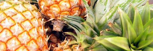 Les ananas sont-ils gangrenés à l'acétylène ?