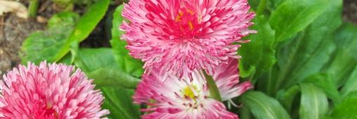 Hortithérapie, bien-être au jardin