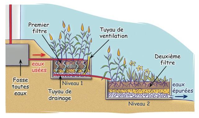 Phytoépuration