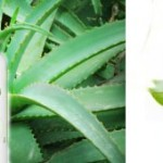 Jus d'Aloe Vera : allié cosmétique et bien-être...