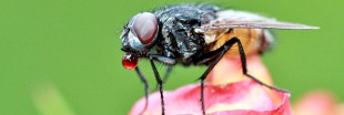 10 astuces naturelles pour chasser les mouches!