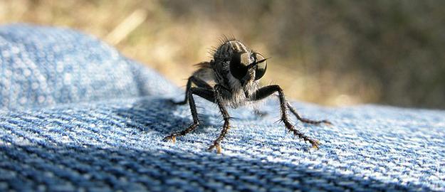 chasser-les-mouches-maison-éloigner-insectes-astuces-