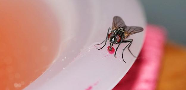 chasser-les-mouches-maison-éloigner-insectes-astuces-02