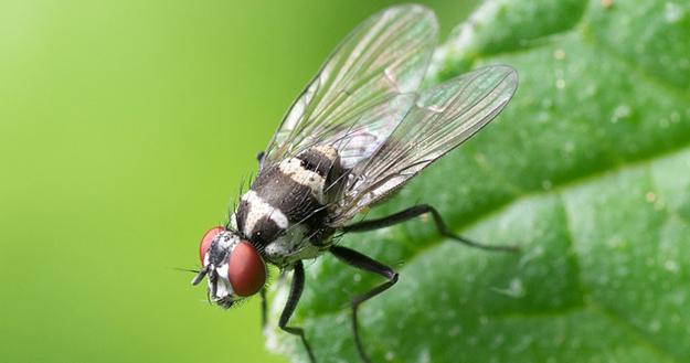 chasser-les-mouches-maison-eloigner-insectes-astuces