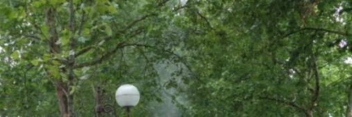 Tigre du platane, vers une lutte biologique