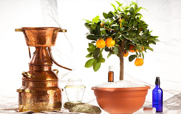 eau florale hydrolat cosmétique beauté