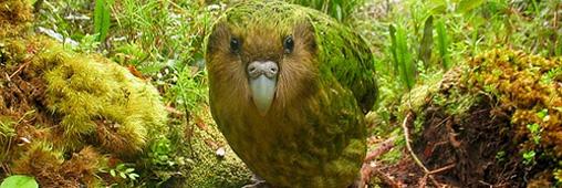Biodiversité. Le top 10 des animaux insolites