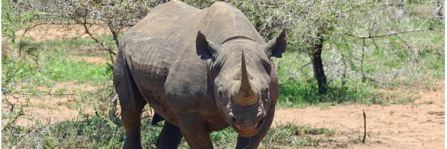 14 espèces animales disparues - DIAPORAMA