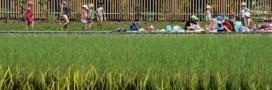 Piscines naturelles publiques: les collectivités françaises font le grand saut