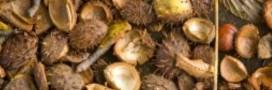 L'huile essentielle de marronnier contre les araignées