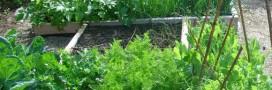 Éviter les accidents au jardin