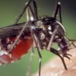 Que valent les lampes anti-moustiques ?