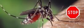 Que valent les lampes anti-moustiques?