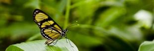 Les plantes préférées des papillons dans votre jardin