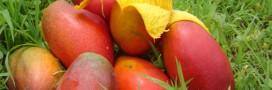 Recette bio du smoothie papaye et mangue