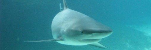 Ailerons de requin : le scandale qui dévore la Chine
