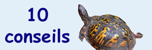 10 conseils pour adopter une tortue