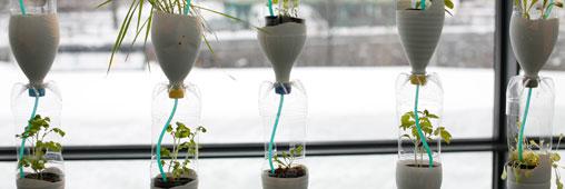 Image result for pousser légumes intérieur