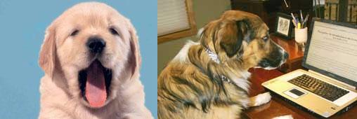 Les chiens peuvent-ils lire nos pensées?