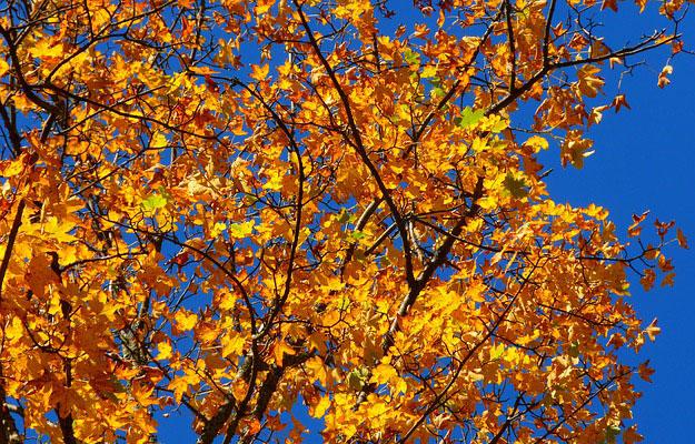 feuilles-automne-abres