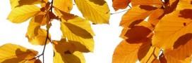 Pourquoi les feuilles changent-elles de couleur en automne?