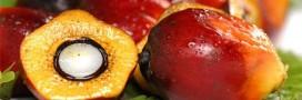 Garanti sans huile de palme: le nouvel atout communication des marques?