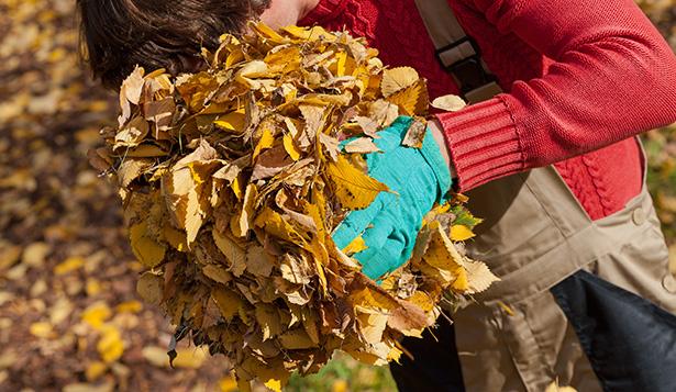 feuilles automne couleur