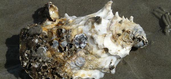 huitre-mollusque-crustace-reveillon-alimentation-05