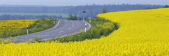 Produire des biocarburants est-il une menace écologique ?