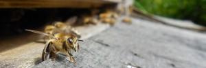 parainner-ruche-abeilles-ban