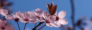 Les plus belles photos de 2012 : belles plantes