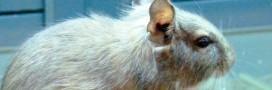 L'Europe bannit les tests sur les animaux (partie 1)