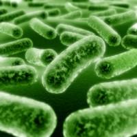 probiotiques