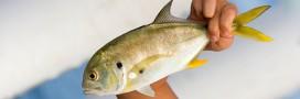 La pêche illicite bientôt combattue activement