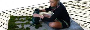GardenRug : de l'herbe pousse au salon
