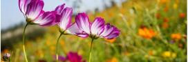 Jardiner de saison: que faire au jardin ce mois ci?