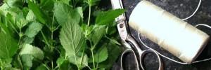 Phyto - Les 5 meilleures plantes pour améliorer la digestion