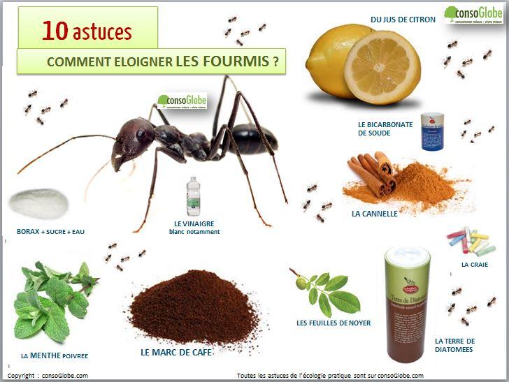 10astuces-fourmis-visuel-éloigner-fourmis-jus-de-citron-vinaigre-craie