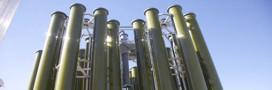 Les micro algues: nouveau carburant?