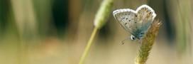 Journée mondiale de la biodiversité: en mai, fêtez la nature!