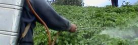 Pesticides, nous sommes plus exposés en France qu'ailleurs