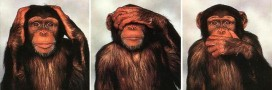 Les grands singes ne sont plus admis à Harvard