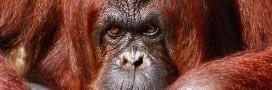 Plus d'animaux sauvages au cirque en Belgique